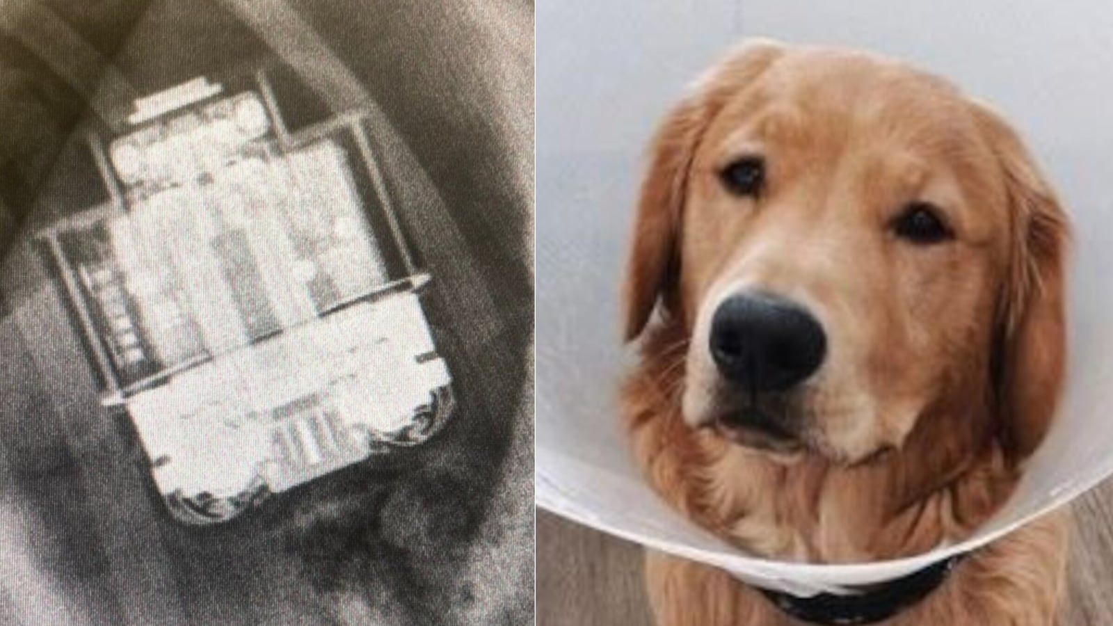 UK vets successfully 'retrieve' working AirPods from Golden Retriever's tummy - HT Tech