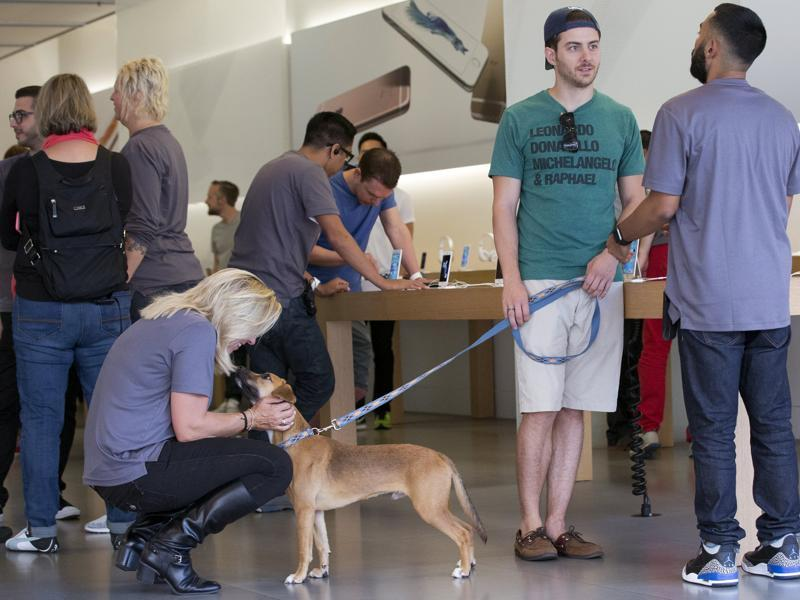 A staff member greets a dog as the Apple iPhone 6S and 6S Plus go on sale at an Apple Store in Los Angeles. (Reuters Photo)
