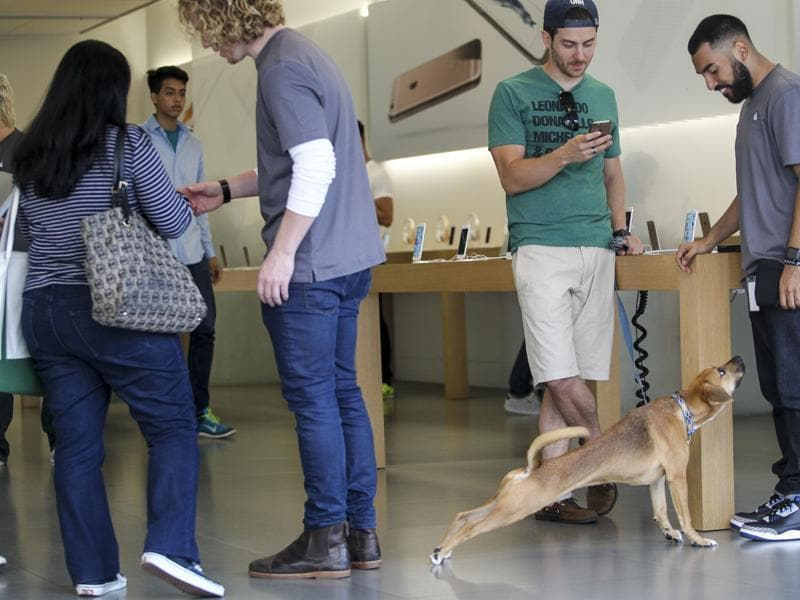 A customer trys out Apple iPhone 6S and iPhone 6S Plus smartphones at the Apple store in Los Angeles. (AP Photo)